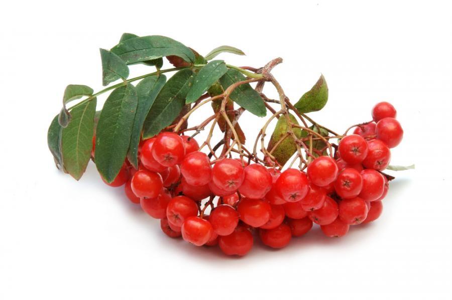 http://melissa-taldom.ru/images/catalog/berries/ryabina_vefed